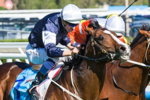 Sea Moon has been included in nominations for the 2014 Bart Cummings