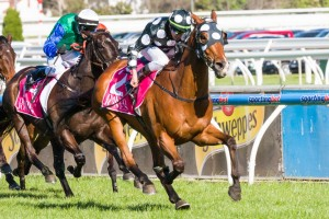 Solzhenitsyn is chasing his third win at Group 1 level in the 2013 Mackinnon Stakes at Flemington on Saturday.