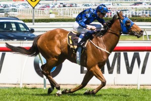 Buffering recorded yet another win at Group 1 level with a brave win in the Winterbottom Stakes at Ascot this afternoon.