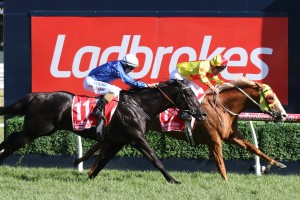 Ladbrokes Melbourne Autumn Racing Carnival Featured Horses - Mighty Boss