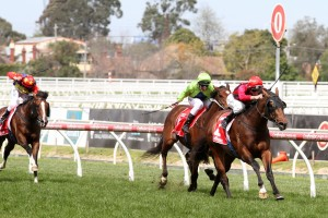 Emirates Stakes for 2016 Ladbrokes Caulfield Classic Winner Good Standing