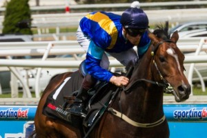 It's A Dundeel is the new favourite in 2013 Cox Plate betting markets following the withdrawal of Atlantic Jewel.