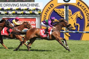 2016 Adrian Knox Stakes Tips and Betting Preview