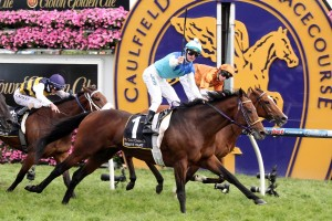 Caulfield Cup winner and Melbourne Cup favourite Admire Rakti will leave from the ideal barrier 8 on the first Tuesday on November. Photo: Race Horse Photos Australia