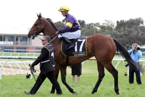 Big Memory will aim for his place in the Group 1 Sydney Cup field this Saturday in the Mornington Cup.
