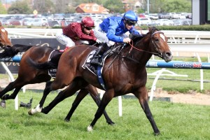 John O'Shea has underlined the 2015 Ranvet Stakes as the likely first major target for Contributer in autumn. Photo: Race Horse Photos Australia