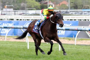 Lucky Hussler remains an outside chance of contesting the 2014 Railway Stakes. Photo by: Race Horse Photos Australia
