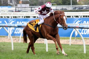 Stratum Star will search for his third consecutive win this Saturday in the Carbine Club Stakes.