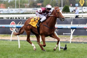 Stratum Star will enjoy a start from barrier two in the Sandown Guineas.