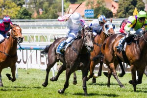 Arabian Gold produced a strong staying effort to win the Listed Ethereal Stakes at Caulfield this afternoon.