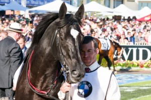 Dandino on Track for Caulfield Cup 2015 Campaign