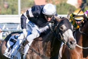Caulfield Cup 2013 Results – Fawkner Wins
