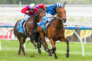 Nordic Empire has been scratched from the 2014 Magic Millions 2YO Classic field.