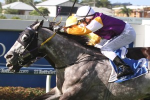 Steel Zip is primed for a big run in Tuesday's Listed Sunshine Coast Cup. Photo: Daniel Costello