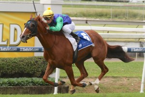 Pretty Pins is a leading chance for success in the 2014 Premier's Cup