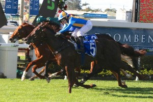 2016 Vo Rogue Next for Undefeated Winning Rupert