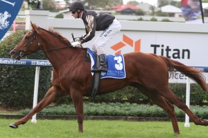 2015 Stradbroke Handicap to Figure for Black Heart Bart
