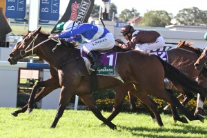 Trainer Clarry Conners is confident in a strong 2014 Spring Racing Carnival for Dear Demi