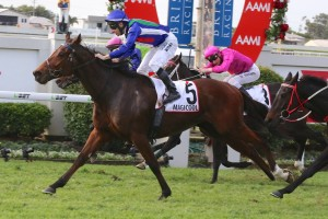 Magicool will likely resume in the 2015 Memsie Stakes on Saturday week. Photo: Daniel Costello