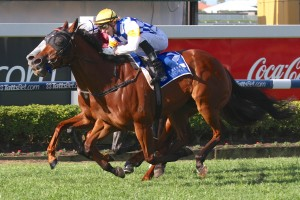 Elusive Storm is well-tipped to win the 2014 Travel Associates Classic at Doomben this Saturday.