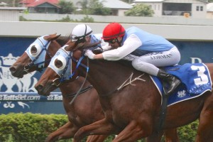 2014 BJ McLachlan Plate Results: Mishani Honcho Beats Wicked Intent