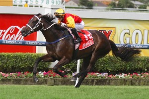 Guy Walter Stakes hopeful Tarloshan has won all of her four starts over 1400m.