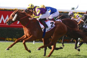 Sonntag wins the 2014 Group 1 Queensland Derby at Eagle Farm