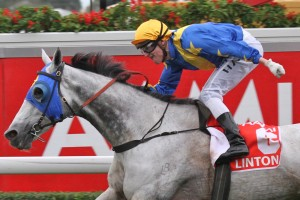 2013 Stradbroke Handicap Winner Linton Denies Buffering