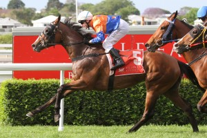 Trainer Tony Gollan is quietly confident of success for Tornado Miss in the 2014 Queensland Oaks