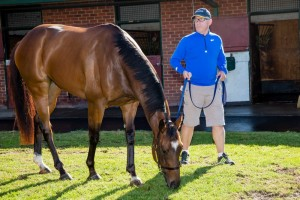 Trainer Mick Price is pleased with Hardham ahead of Saturday's 2016 McNeil Stakes at Caulfield. Photo: Sarah Ebbett
