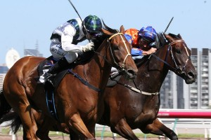 Red Excitement (outside) will be at his peak form in the Carlyon Cup after an impressive 13 length trial win last week.