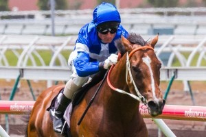 Nostradamus is outright favourite for success in the 2014 McNeil Stakes