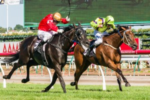Elusive King Form Guide And Race Results Formguides Com Au