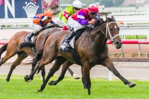 Hucklebuck is favourite to win the 2014 Yellowglen Stakes this Saturday.