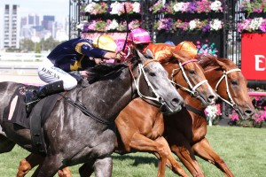 Terravista fought out the finish in the Black Caviar Lightning Stakes 12 months ago. Photo by: Ultimate Racing Photos