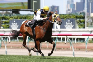 2017 Tattersall's Cup Betting Tips & Update: Tucanchoo Out