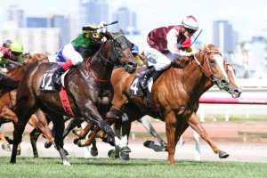 2016 Queensland Guineas Tips and Betting Preview