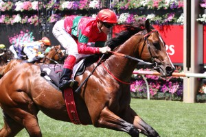 Weatherly comfortably won the Listed Talindert Stakes (1100m) at Flemington this afternoon. Photo: Ultimate Racing Photos