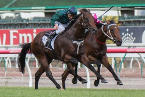 Wandjina (outside) and Disposition (inside) will meet on equal weights in the Group 1 Australian Guineas.