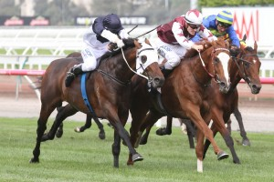 Tarzino (outside) is primed for a big performance in Saturday's Group 1 Rosehill Guineas. Photo: Steve Hart