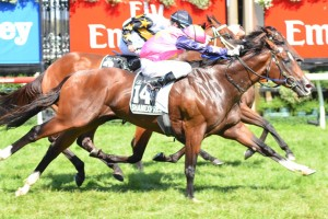 Shamexpress will attempt to defend his 2013 Newmarket Handicap title at Flemington this weekend