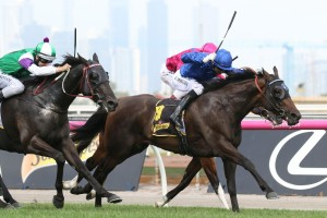 Circular scored a narrow victory in the Matron Stakes at Flemington this afternoon. Photo by: Ultimate Racing Photos