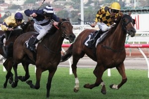 Oncidium Ruler Heads 2015 VRC St Leger Stakes Nominations