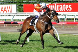 Star Rolling will contest Saturday's Piping Lane Handicap at Flemington fifth-up. Photo: Race Horse Photos Australia