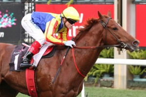 Melbourne Autumn Racing Carnival: Featured Horses - Spieth