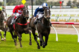Bayoonah will take on the likes of Profit Share (red cap) in the Seascay Handicap at Flemington this Saturday.