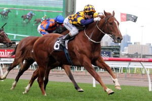 Eximius will step up to 2000m for the first time in Saturday's 2016 Doriemus Handicap at Flemington. Photo: Race Horse Photos Australia