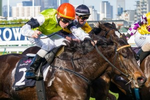 Trainer Dan O'Sullivan is thrilled with the condition of Tuscan Fire ahead of the 2014 Ballarat Cup. Photo: Race Horse Photos Australia