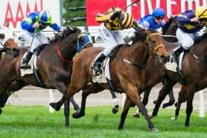 Trainer Saab Hasan has confirmed Shoreham will be nominated for the 2014 Melbourne Cup