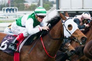 Speediness is a leading chance for success in the 2014 Sir Rupert Clarke Stakes